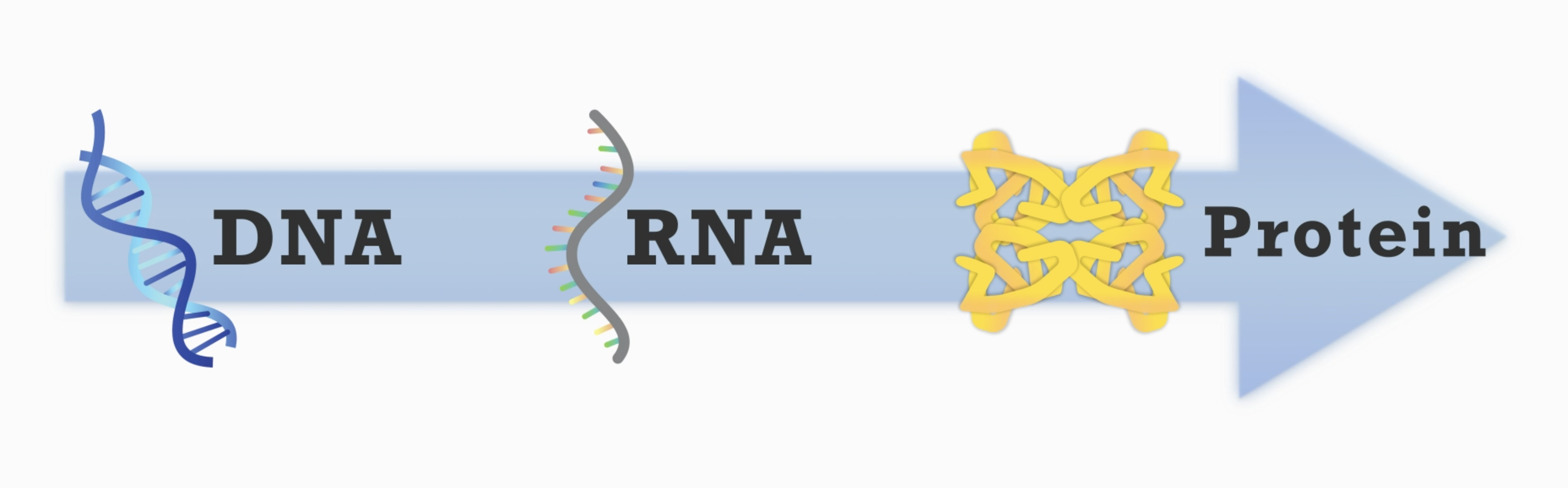 dna_rna_protein.png
