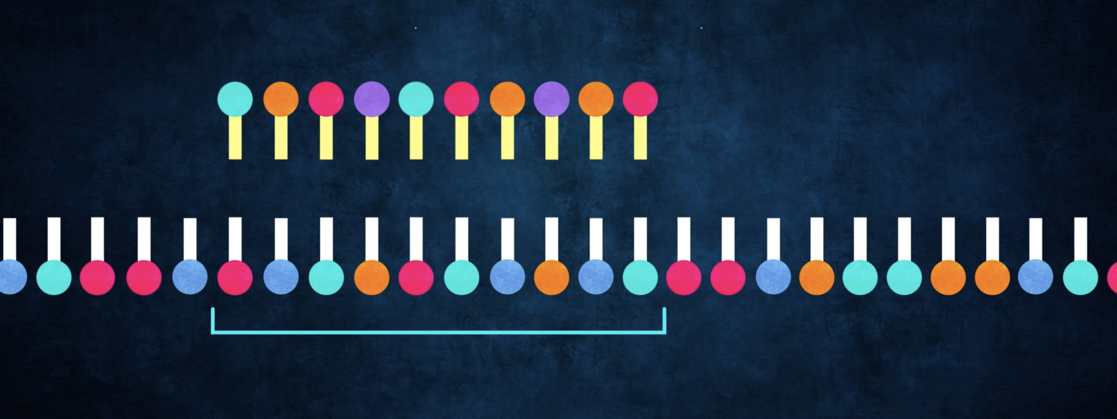 section_of_dna.png